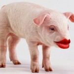 pig-with-lipstick